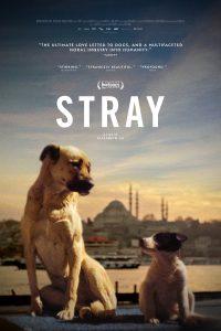 'Stray'